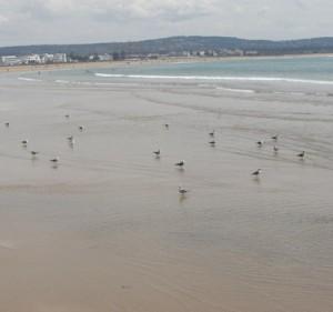 playas-de-Essaouira